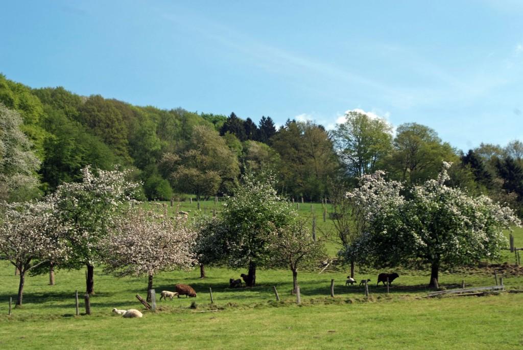Ostern im Bergischen Land, Foto: Wolfgang Winter-Peter