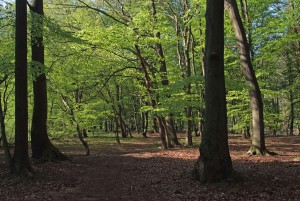 Der Tigerwald